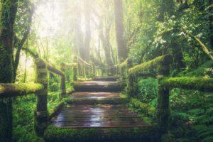 brug naar de toekomst
